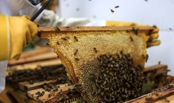 Tom Meadows: Bees and Beekeepers
