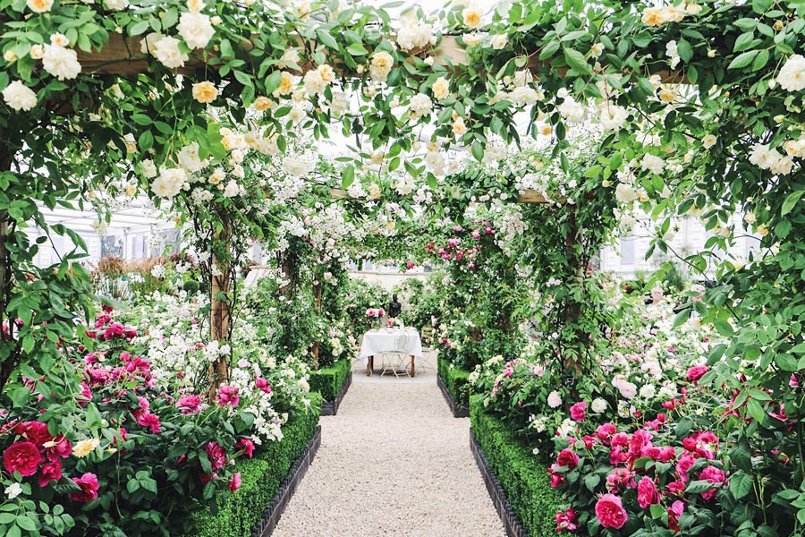The RHS Chelsea Flower Show 2020